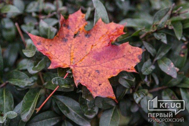 Погода в Кривом Роге 20 октября
